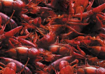 header-deanies-crawfish