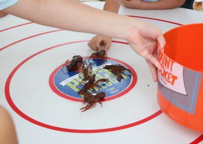 PinchaPalooza_crawfish races_lined up copy